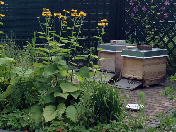 Bienenbeuten hinter Alantblüten